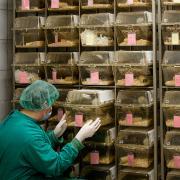 עבודה עם חיות מעבדה